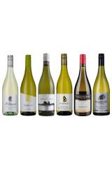 Sauvignon Blanc Favorites 4.0