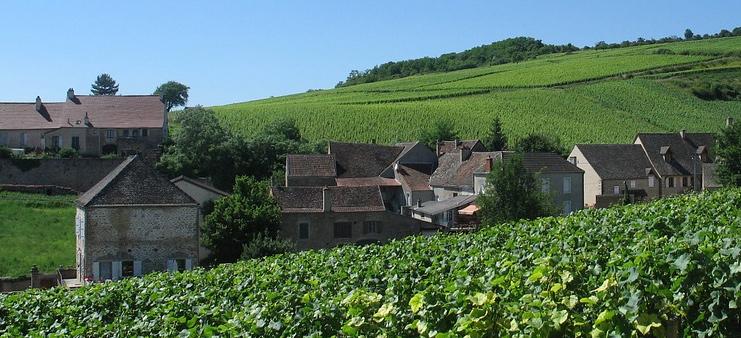 Bordeaux vin Frankrig vinmark