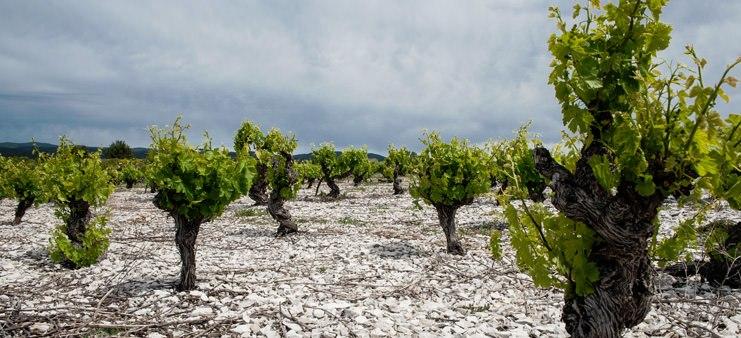 Calmel + Joseph vin Frankrig