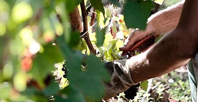 A. Bergère Blanc de Blancs Brut Champagne