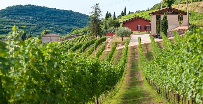 Corte Cavedini's vingård i Valpolicella