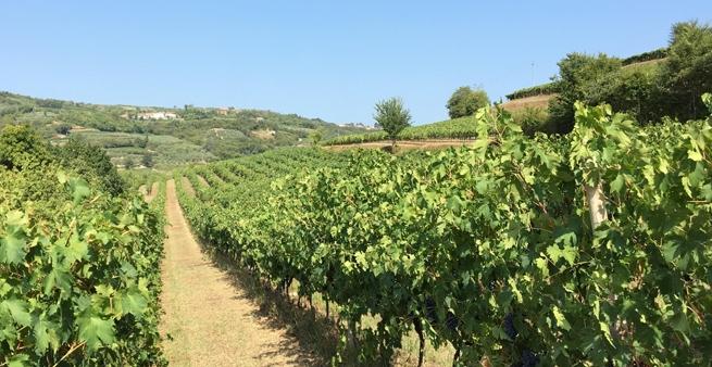 Corte Scaletta Valpolicella vinmarker