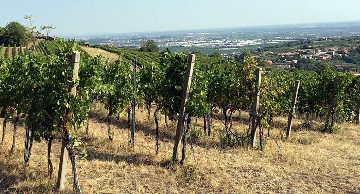 Udsigt ud over vinmarker i Valpolicella